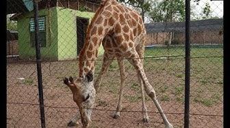 The Zoo- Ibadan 1